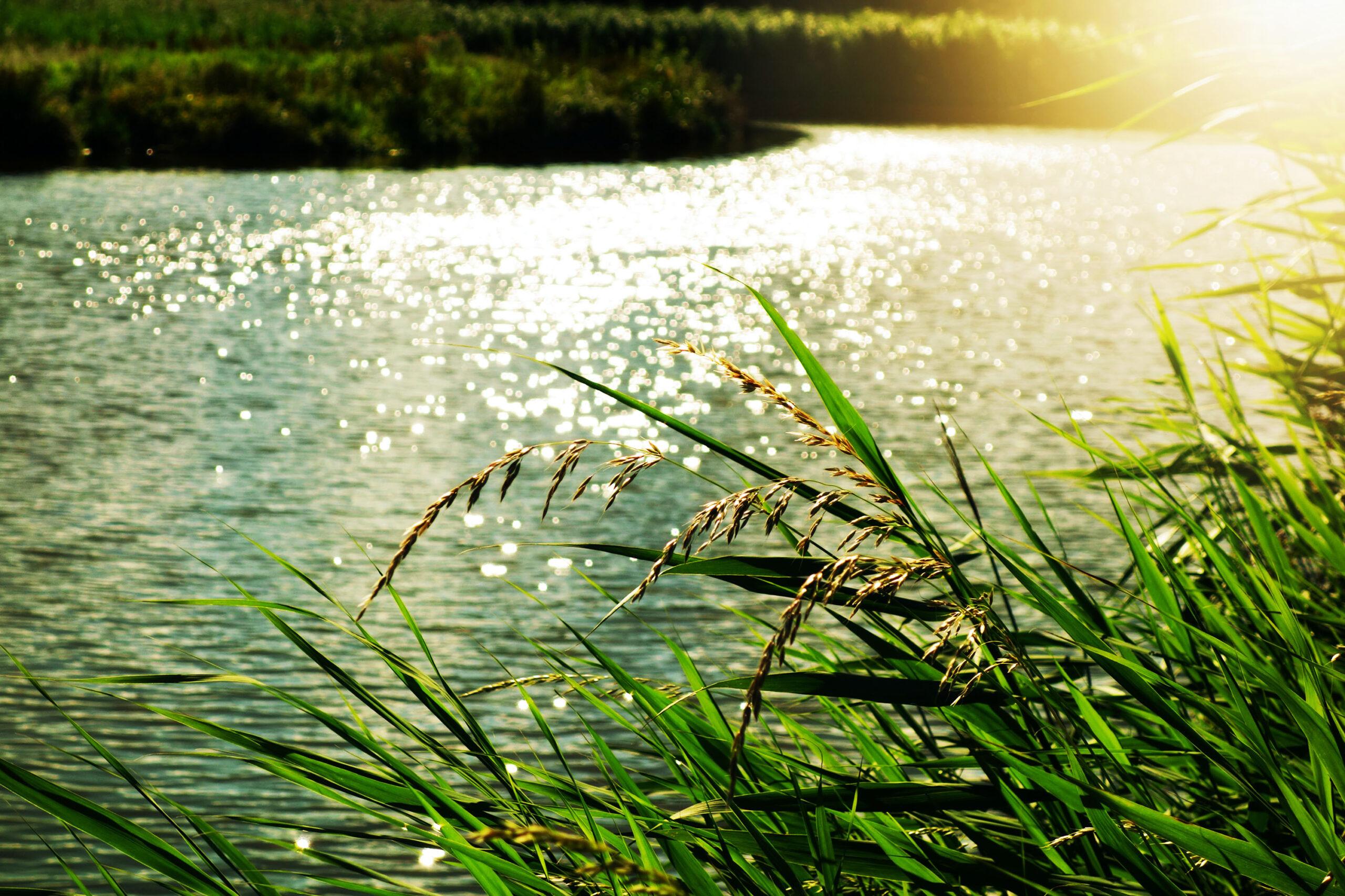 Sonne Natur Wasser Grün