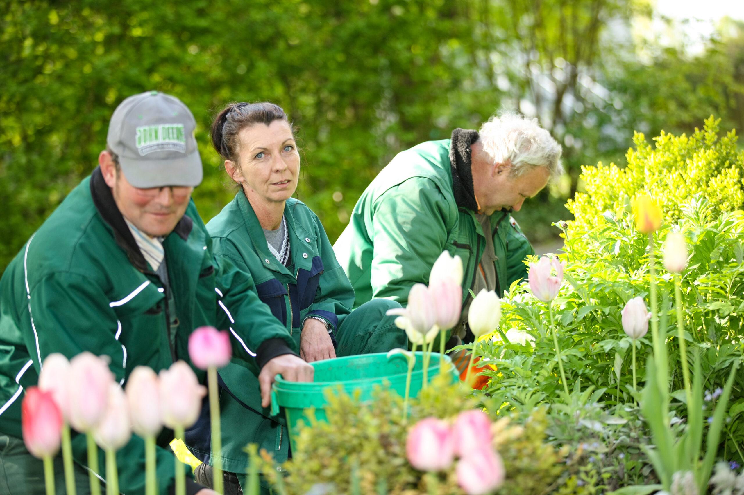 Drei Gärtner im Grünen